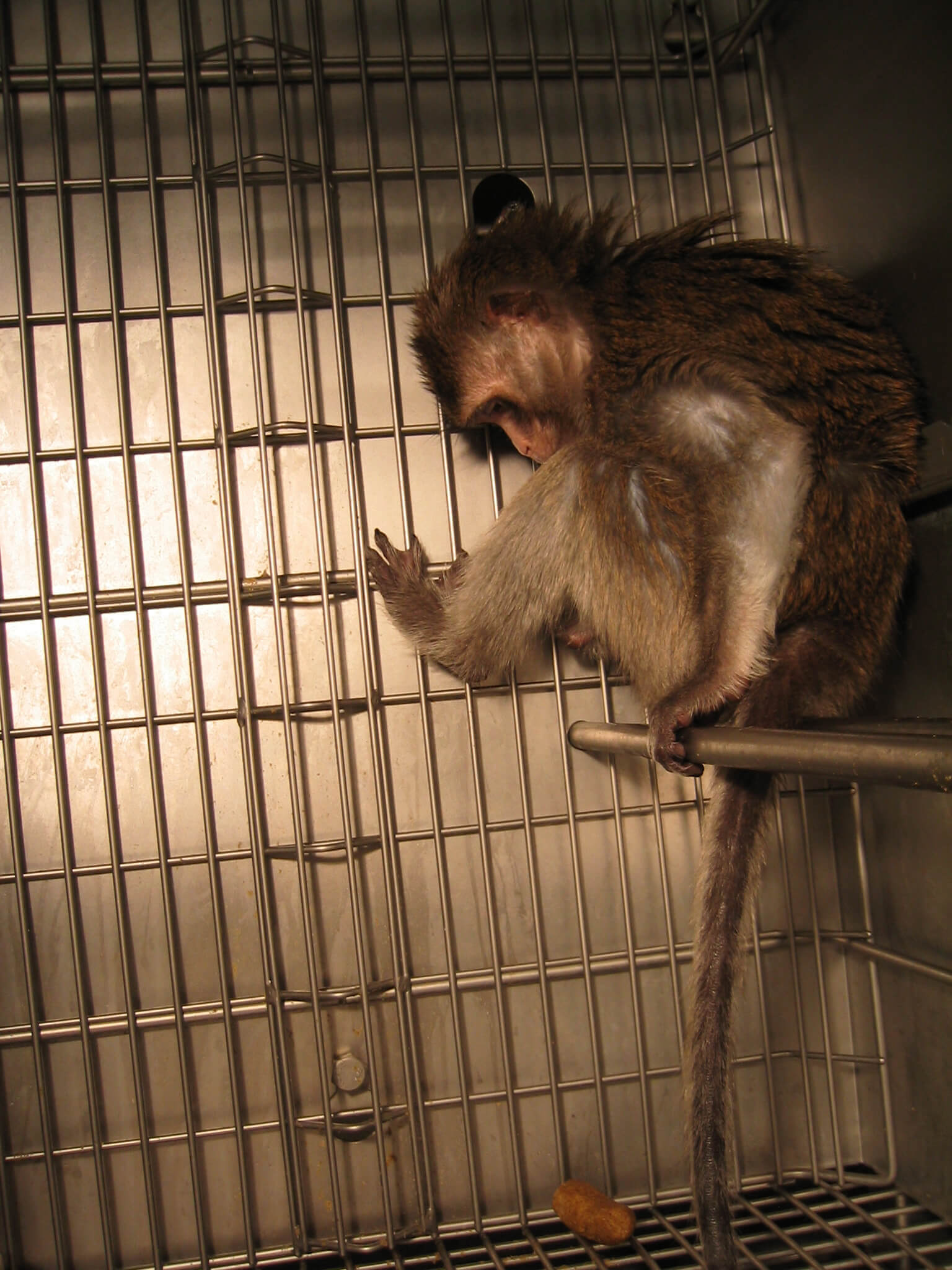 China Southern Monkey