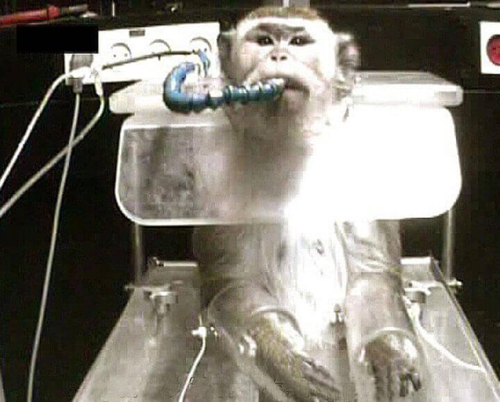 Monkey at Weizmann Institute
