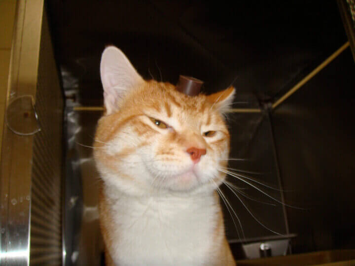 Robert the Cat