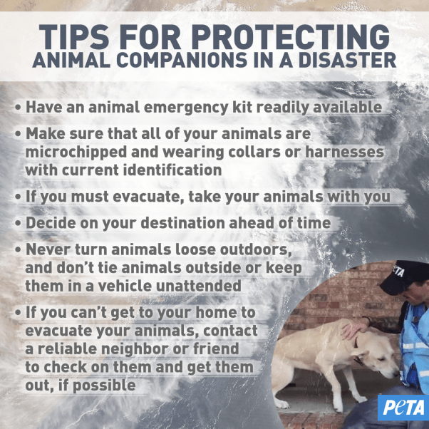 Tips for Protecting Companion Animals in a Disaster