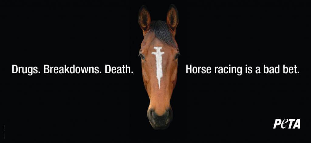 Horse Racing Is a Bad Bet PSA