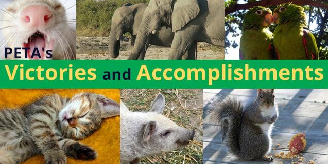 PETA's Victories and Accomplishments