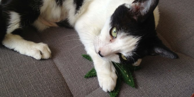 Medical Marijuana for Animals: A Case for Compassion