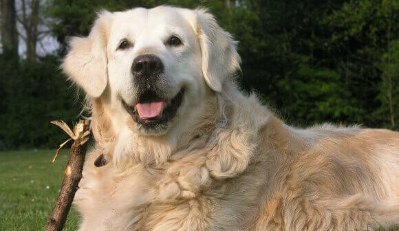 Finding a Reputable Sitter for Your Companion Animal Friend
