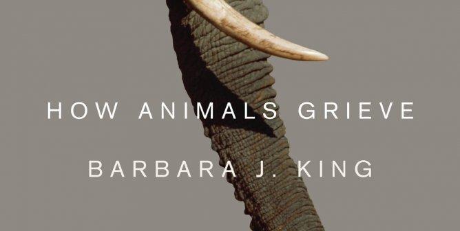 How Do Animals Grieve?