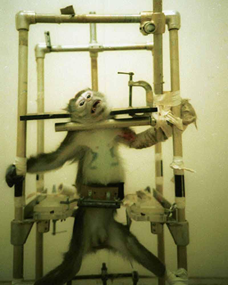 1981 – Silver Spring Monkeys