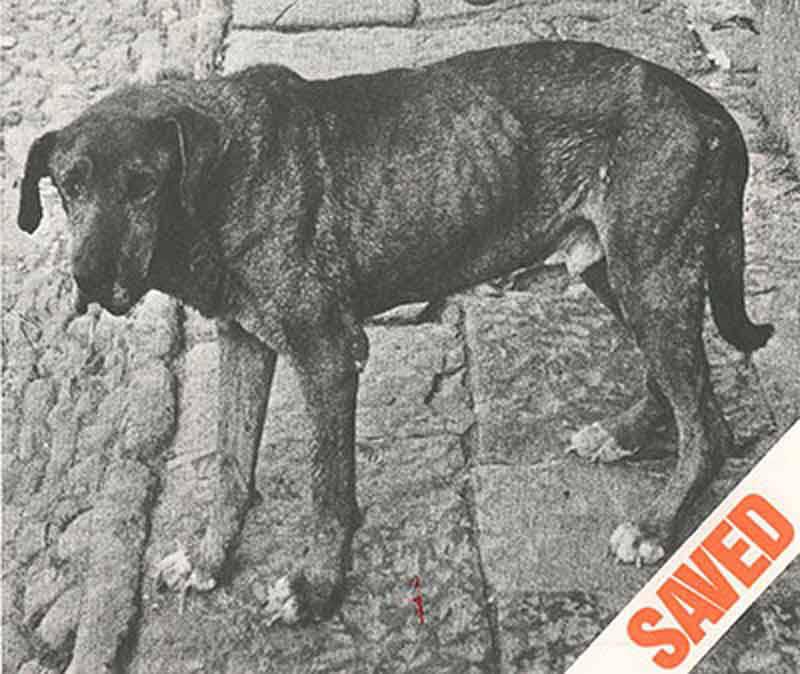 1987 – Cedars-Sinai