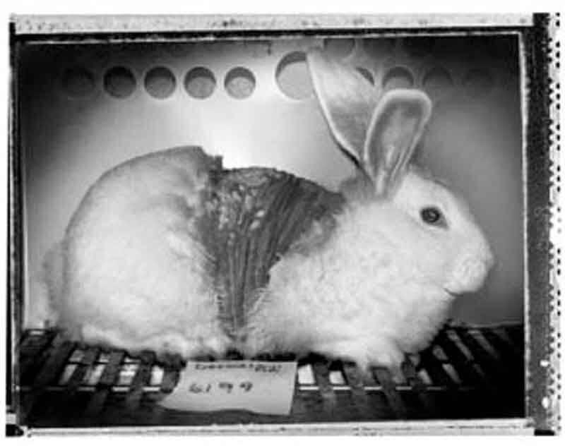 1988 – Biosearch Undercover Investigation