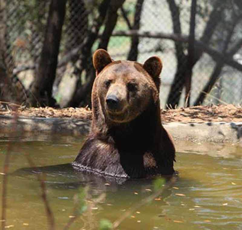 2012 – Ben the Bear