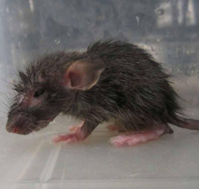 2012 – Global Captive Breeders