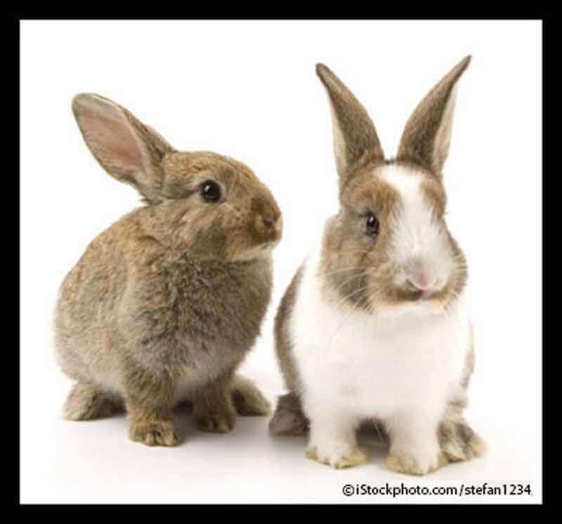 2012 – China 1st Non-Animal Tests