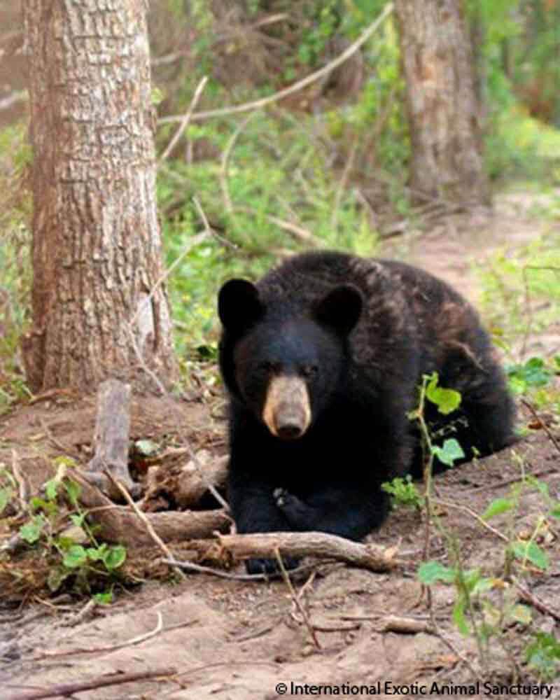 2013 – Chief Saunooke Bear Park