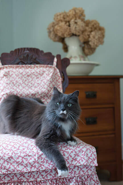 Picking the Perfect Cat-Sitter