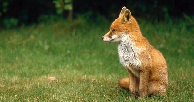 Animal Rights Vs. Conservation