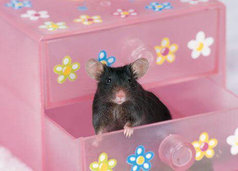 HELP! Animal Cruelty Persuasive/Research Essay? 10 POINTS?