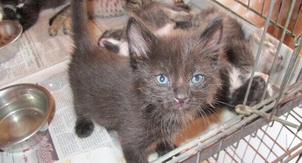 0572.kitten-blue-eyes.jpg