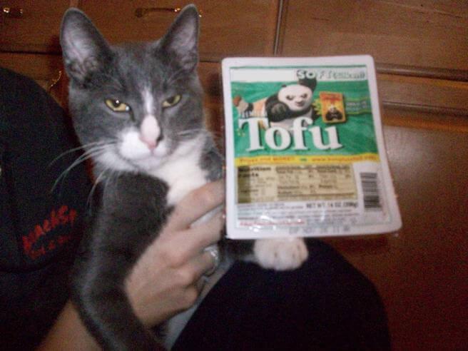 Cats Versus Tofu (Photos)