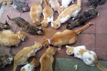 Feral Cats: Trapping is the Kindest Solution