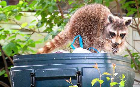 Littering: Teach Students About Its Dangers to Animals