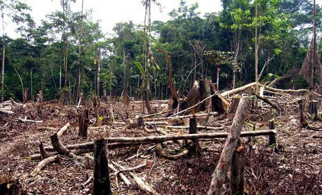 "Deforestation Criminals: Say ""Cheese!"""