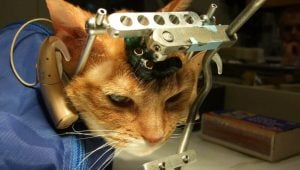 Be a Hero to Animals in Labs