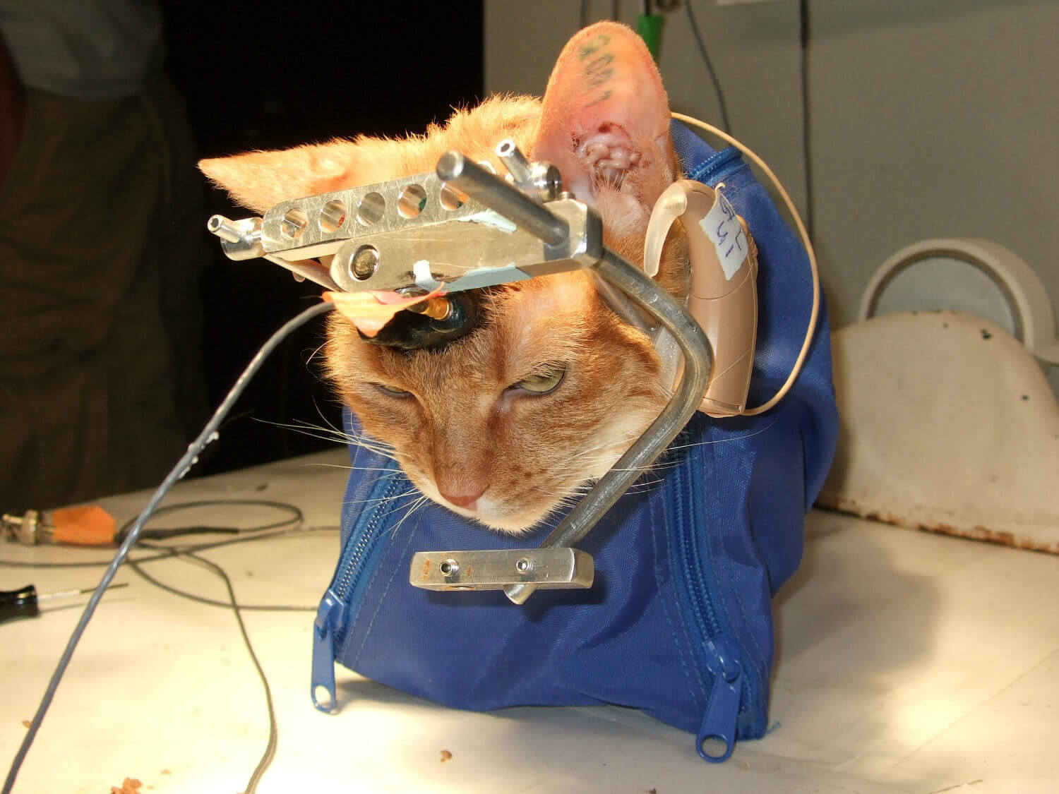 17 Pictures of What Animal Testing Really Looks Like | PETA