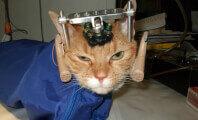 Double trouble, vivisection, chat, expérience, Semaine mondiale pour les animaux de laboratoire