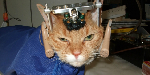 Help Stop Animal Tests—Every Gift Doubles!