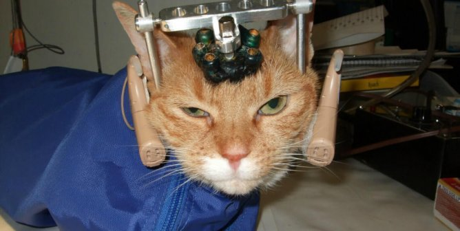 Double Trouble, Vivisection, Cat, Experiment, World Week for Animals in Labs