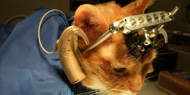 PETA to Cruelty Apologists: Your Defense of Experiments on Cats Is Pathetic