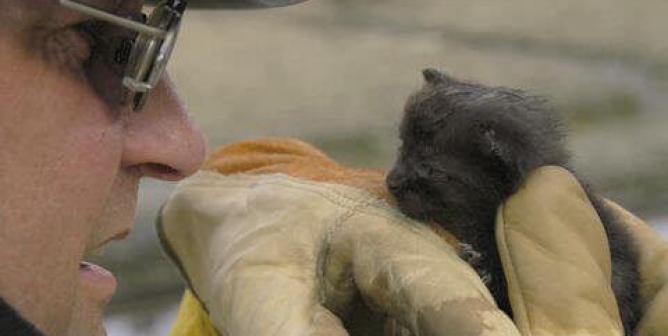 Sedrick Ellis: Disaster Preparedness for Animals