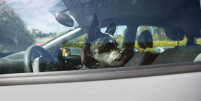 Elisabetta Canalis: Keep Dogs Safe in Summer Heat