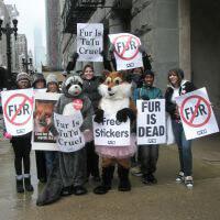 Confronting a Fur-Wearer