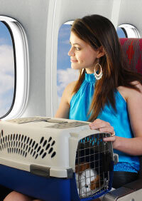 Traveling With Companion Animals