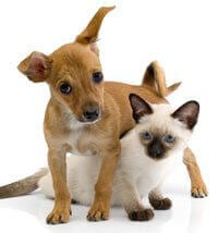Breeders | PETA