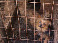 Puppy Mill Prison | PETA