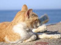 Animal-Friendly Accommodations