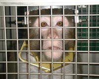 Utah Labs Monkey