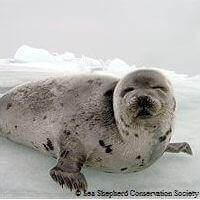 STOP Canadian Seal Slaughter