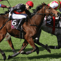 Horses: Racing for Their Lives