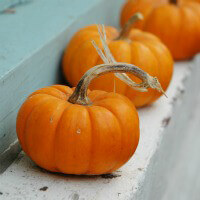 'Fall' for Harvest Fare