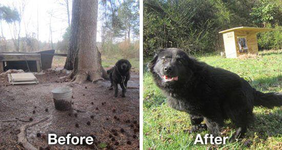 Lonely Backyard Dogs Helped By Peta Peta