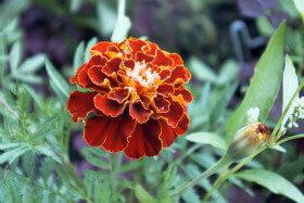 Natural and Harmless Alternatives to Garden Pesticides PETA