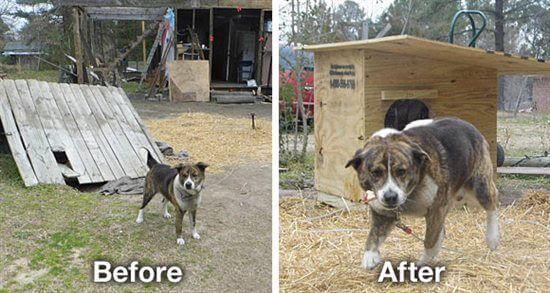 Lonely U0027Backyard Dogsu0027 Helped By PETA! | PETA