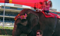 Victory! No Elephant Rides at San Diego Fair