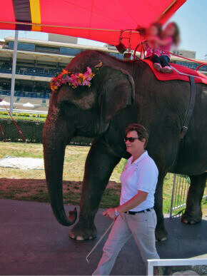 Have Trunk Will Travel Abuses Elephants Peta