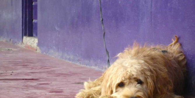 Goodbye, Blue: A Family's Loss of a Beloved Animal Companion