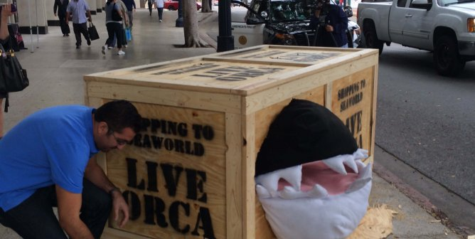 Screaming 'Orca' Fated for SeaWorld Urges Public to Watch 'Blackfish'
