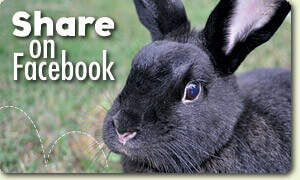Peggy Lucy Bunny Rescue Share on Facebook
