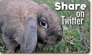 Peggy Lucy Bunny Rescue Share on Twitter